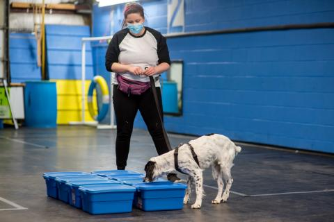 image of Infection Control Practitioner with dog