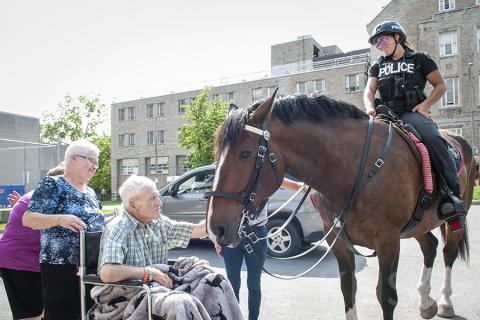 A Kingston Police Horse visits a patient at our KGH site